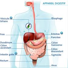 d 'ou proviennent les troubles digestifs