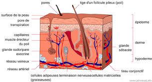 Soigner les maladies de peau